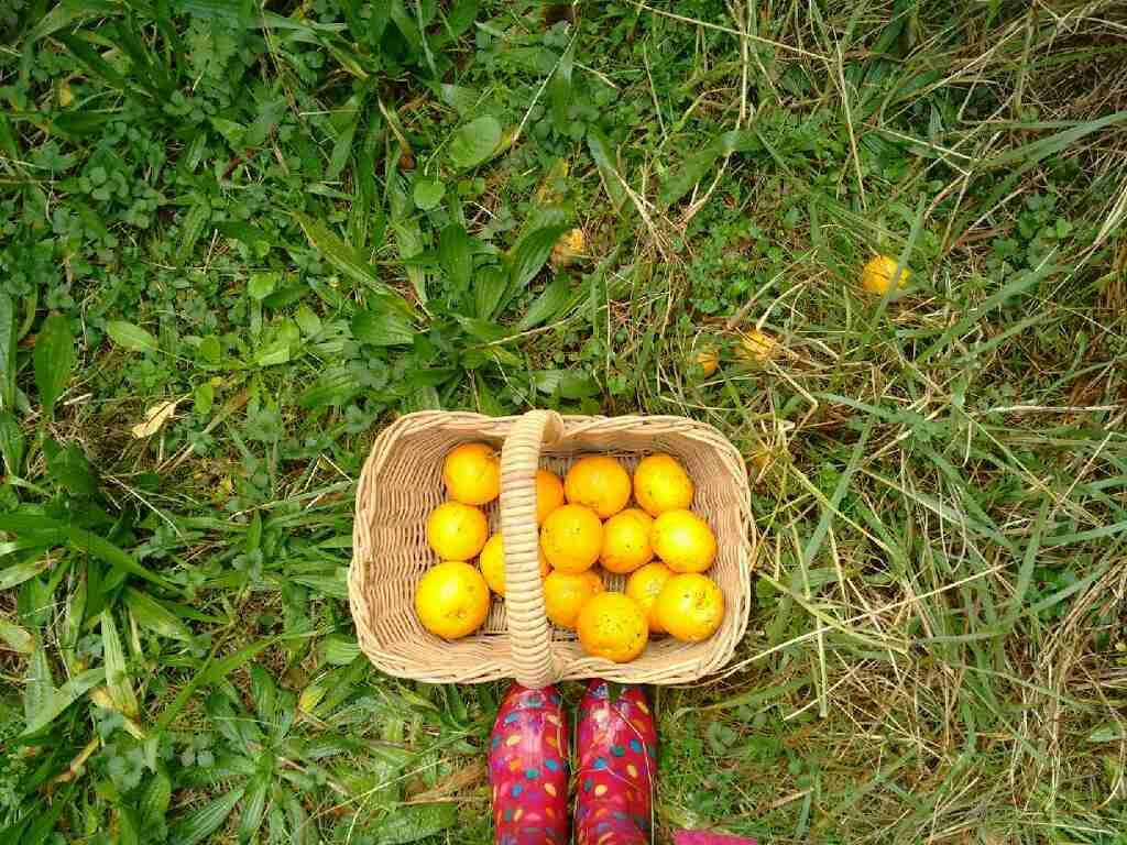 Nurse Jenny picks oranges in pink spotted boots.