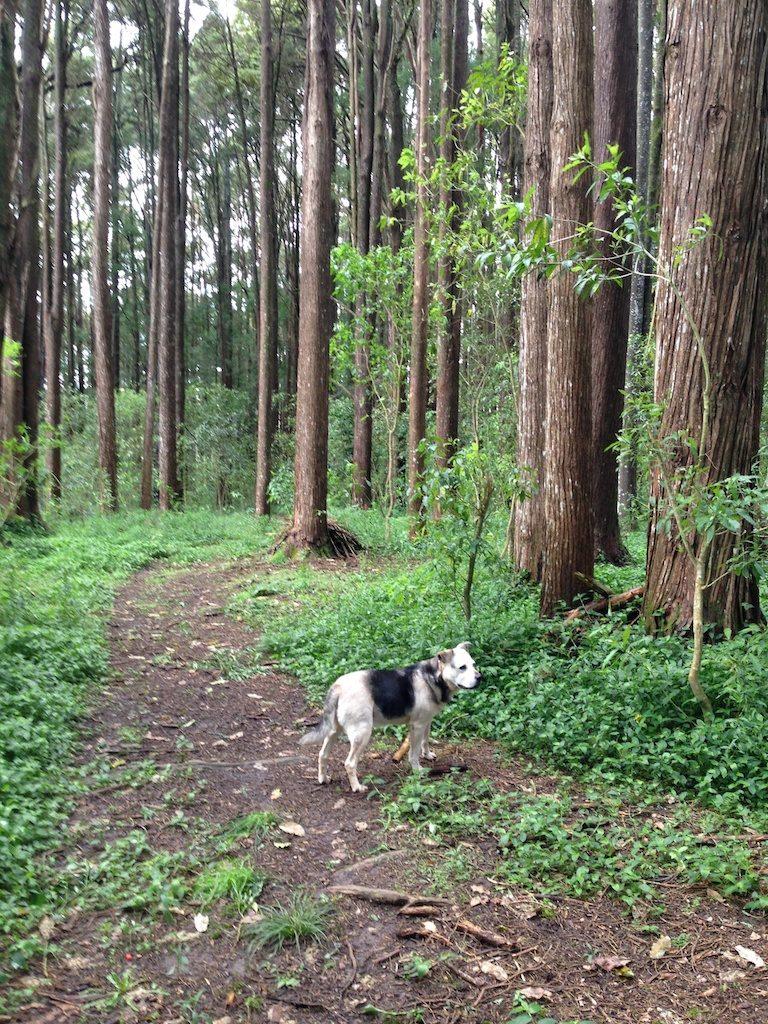 Ella in Seven Acre Wood