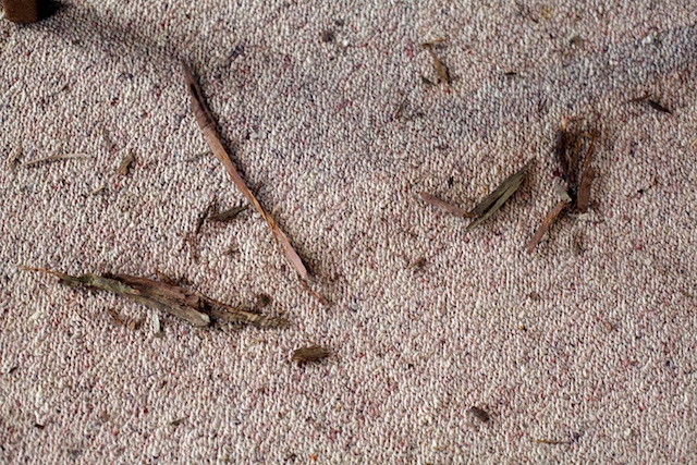 Floor with twigs