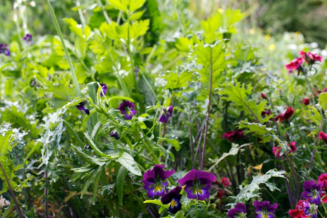 Violas and kale