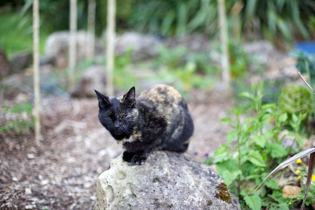 Cat on a rock