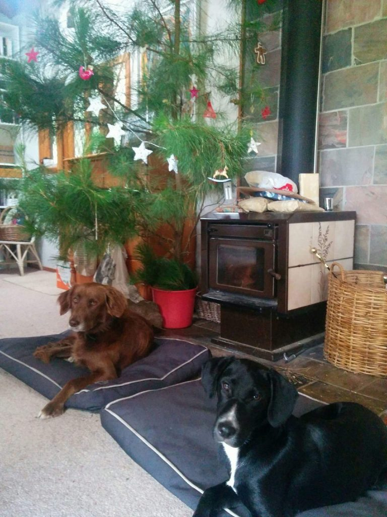 Dogs and Christmas tree