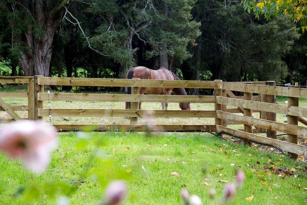 Fence and horse