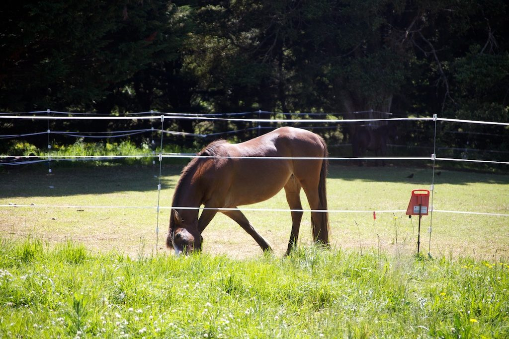 Horse and electric fencing