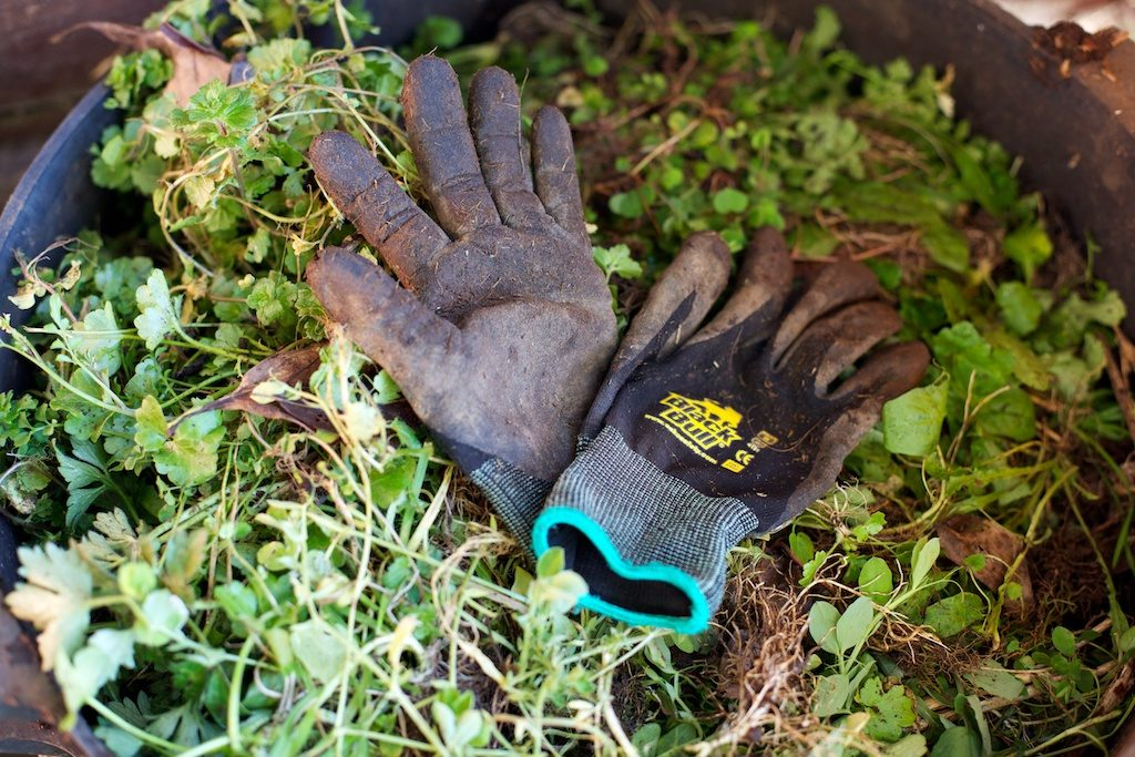 black bull gardening gloves